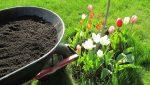 Ako kompostovať burinu