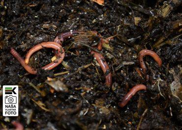Základy vermikompostovania, rozdiely medzi kompostovaním a vermikompostovaním