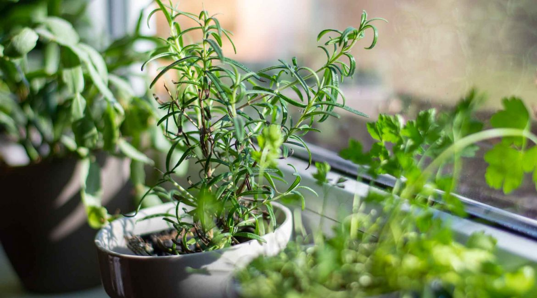 bylinky a dážďovky