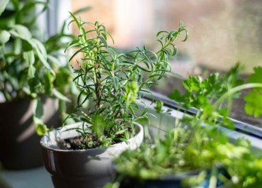 Úplne ste prepadli pestovaniu bytových rastlín? Nezabudnite na dážďovky