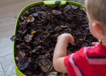Vermikompostovanie alebo Dážďovky v akcii